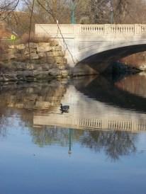 Ducks like this waterway
