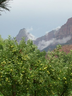Zion.orchard