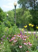 garden with prairie flowers